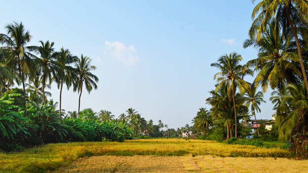 Village by the sea in India.