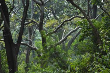 India forest Hanuman 2