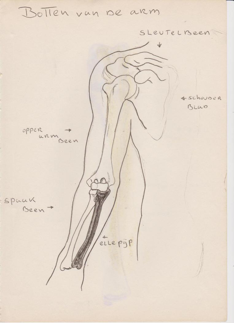 Groß Anatomie Und Physiologie Färbung Arbeitsmappe Kapitel 4 ...
