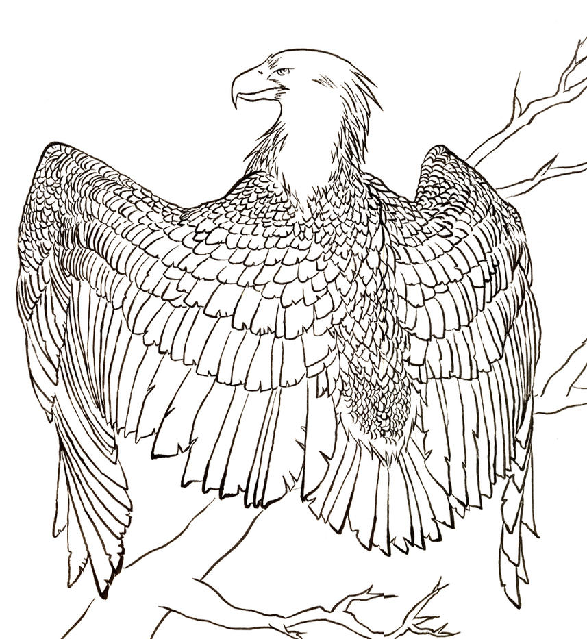 Line art eagle : Eagle lineart by a wildfox on deviantart