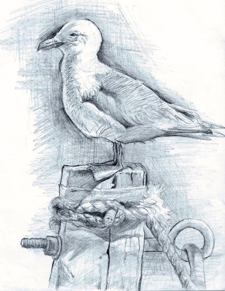 Seagull Seas by stella-luna12