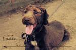 CoCo the Lost Dog 2