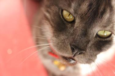 Cat Charlie :3 by WinnieDayDreamer