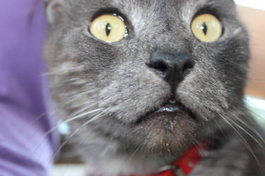 Charlie the cat :) by WinnieDayDreamer