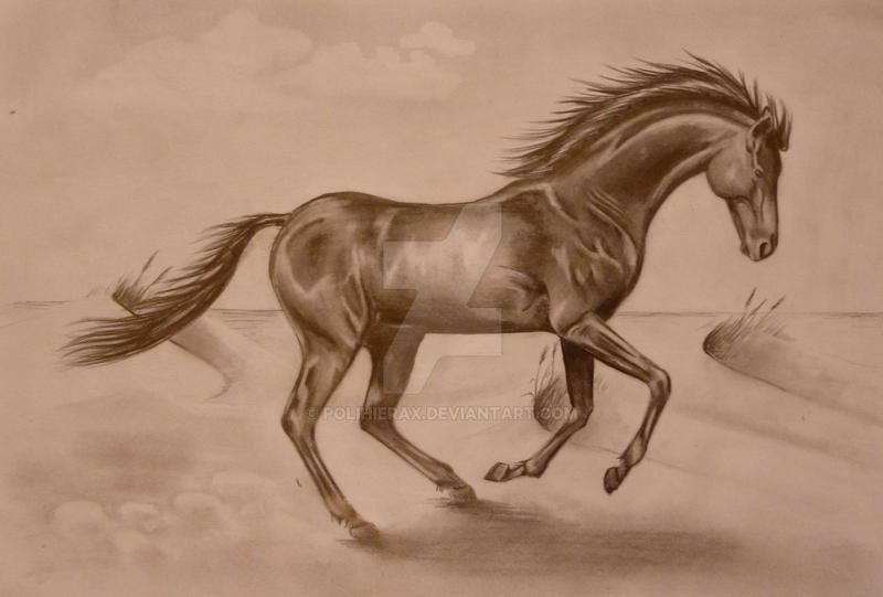 black horse by Polihierax