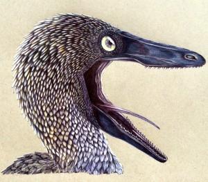 Polihierax's Profile Picture