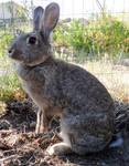 Bunny (12)
