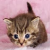 Kitty In Pink Fluffy Blanket Icon by RAWRmarshmallows