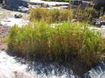 rocking grass