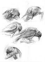 Birds by Vino-grad