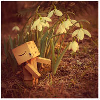 Danbo and the snowdrop