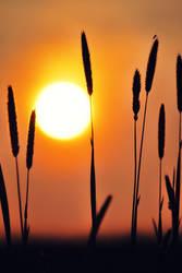 sunsetIV