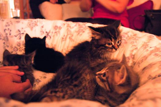 A Kitten Pile disperses