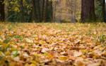 Footpath under leaves