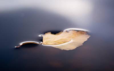 Leaf by Henrikson