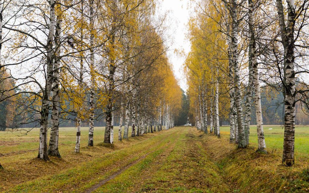 AUTUMN Pavlovsk 7 by Henrikson