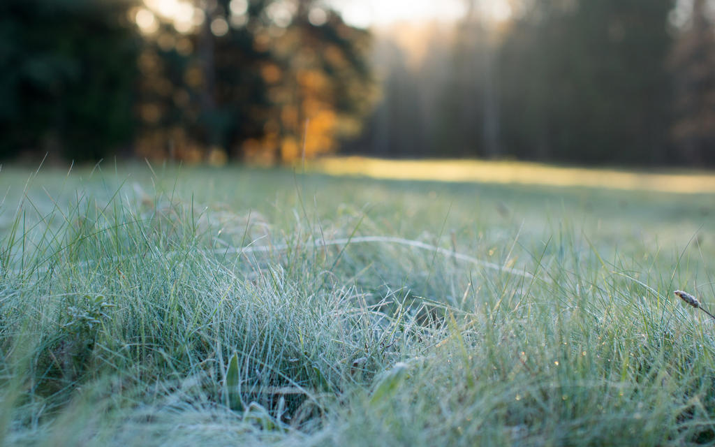 AUTUMN Pavlovsk frosty morning 2 by Henrikson