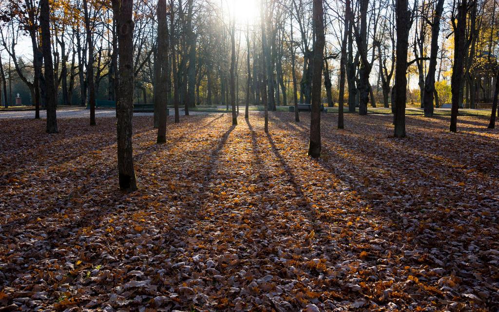 AUTUMN Pavlovsk frosty morning by Henrikson