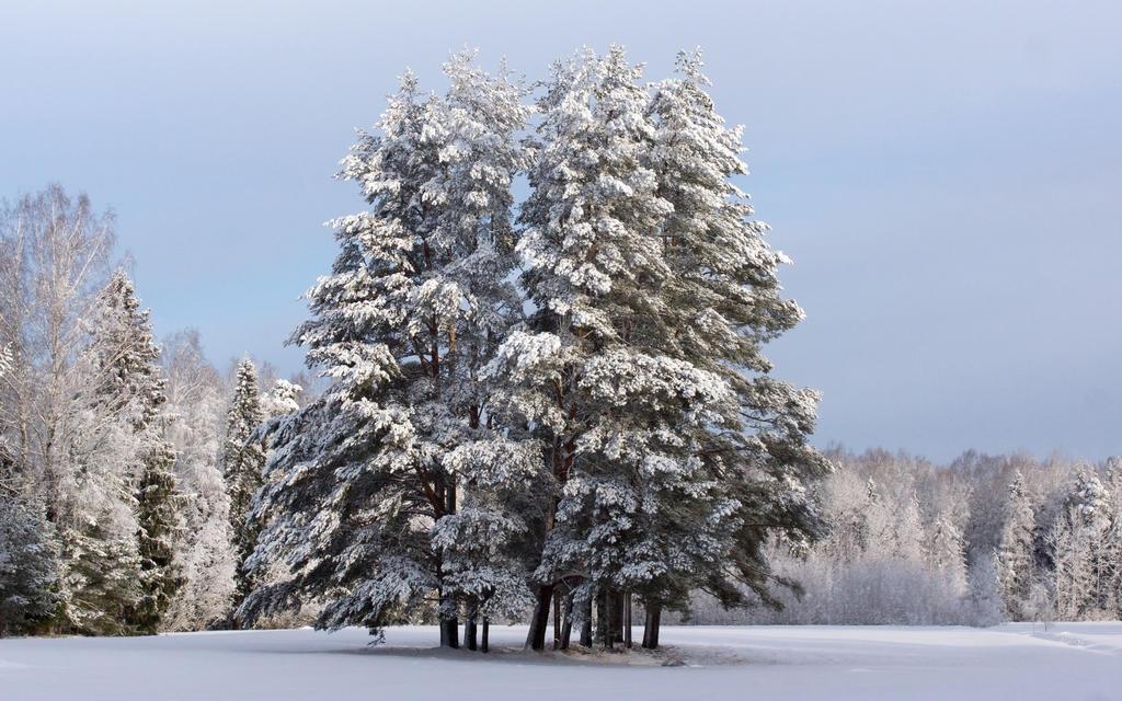 Winter 2015 13 by Henrikson