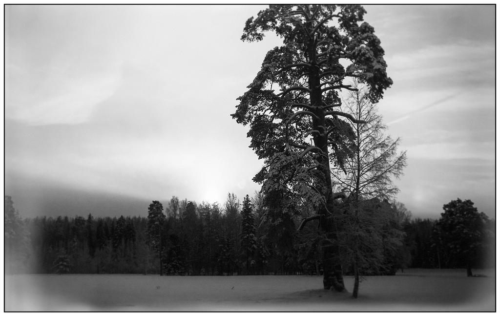 Winter 2015 14 by Henrikson