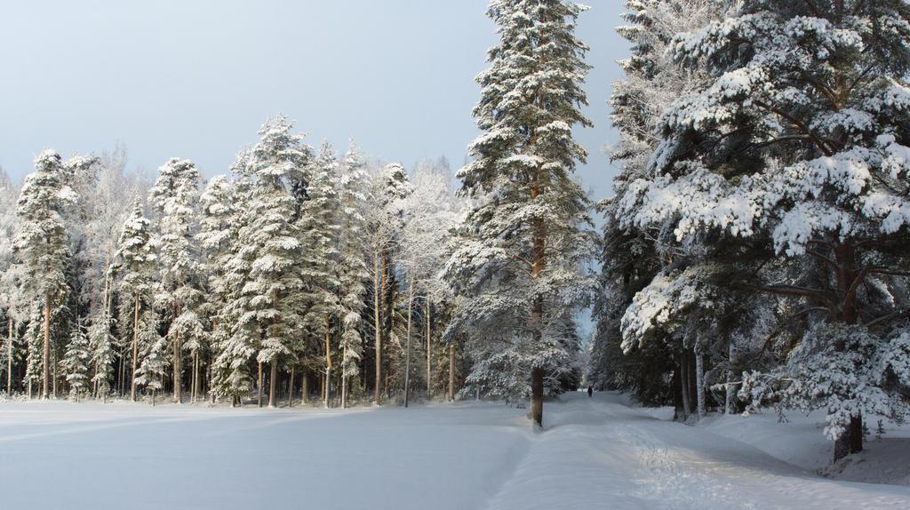 Winter 2015 15 by Henrikson