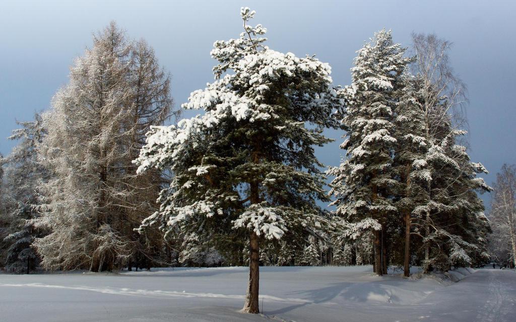 Winter 2015 16 by Henrikson