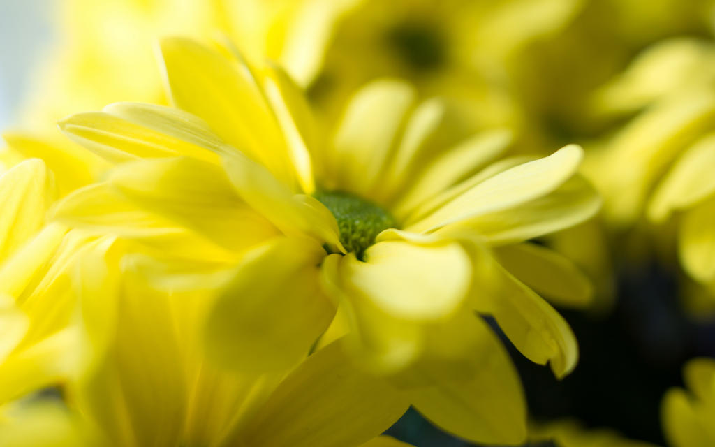 Spring 2015 yellow 1 by Henrikson
