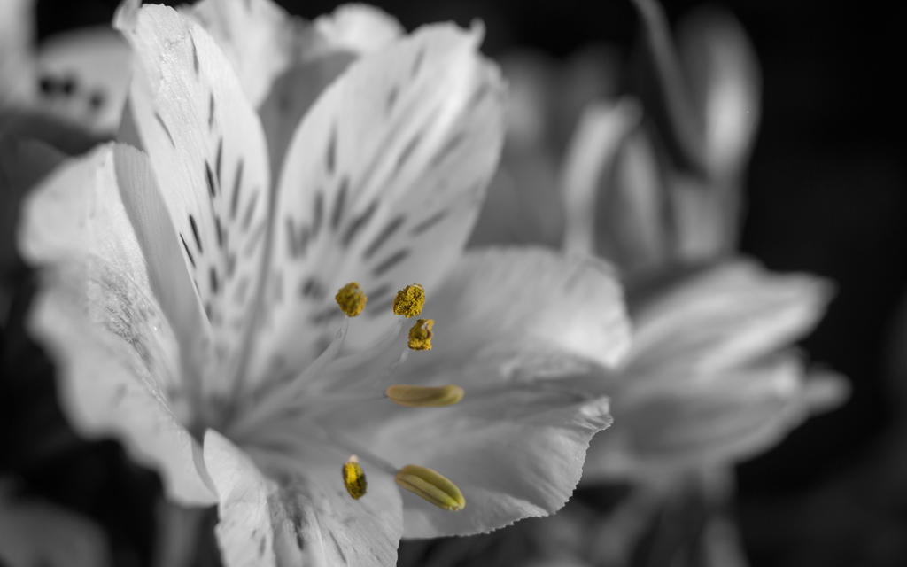 Spring 2015 bw- yellow by Henrikson