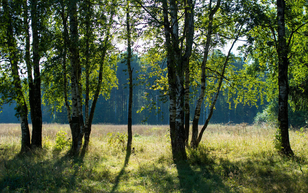 Summer 2015 14 by Henrikson