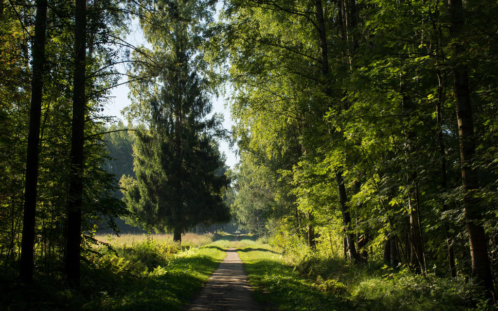 Summer 2015 16 by Henrikson