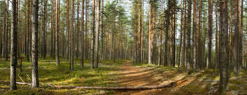 Autumn 2015 Karelia 2 by Henrikson