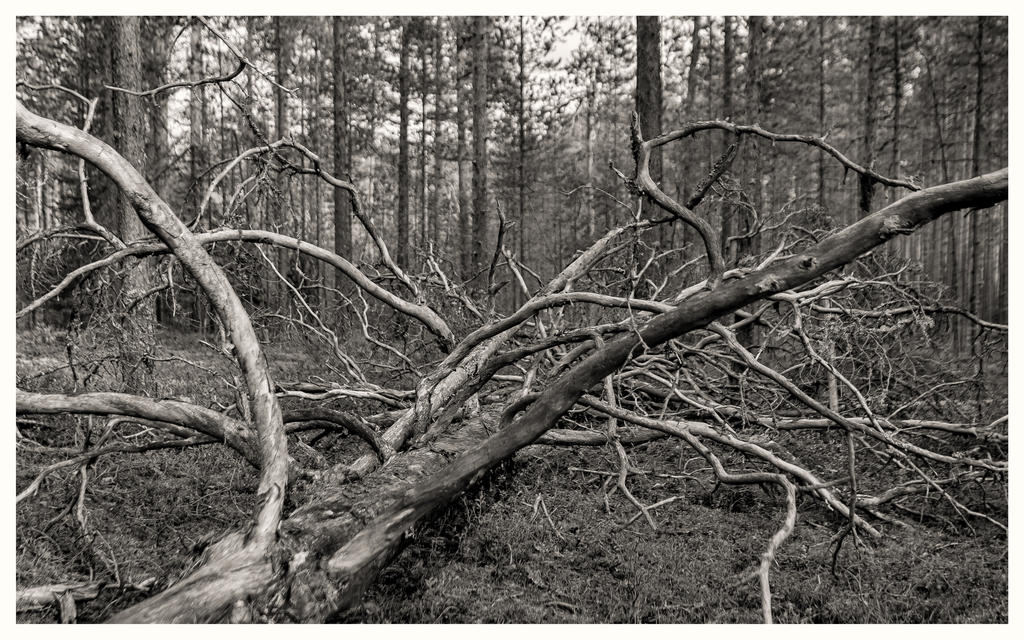 Autumn 2015 Karelia Bones of the wood by Henrikson