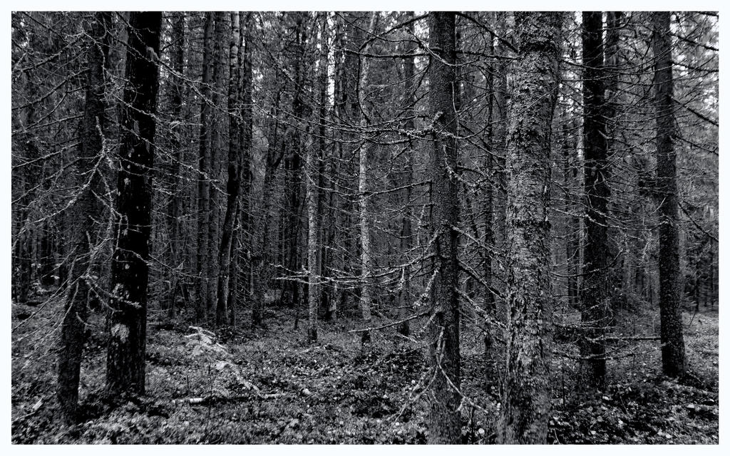 Autumn 2015 Karelia Dark wood by Henrikson