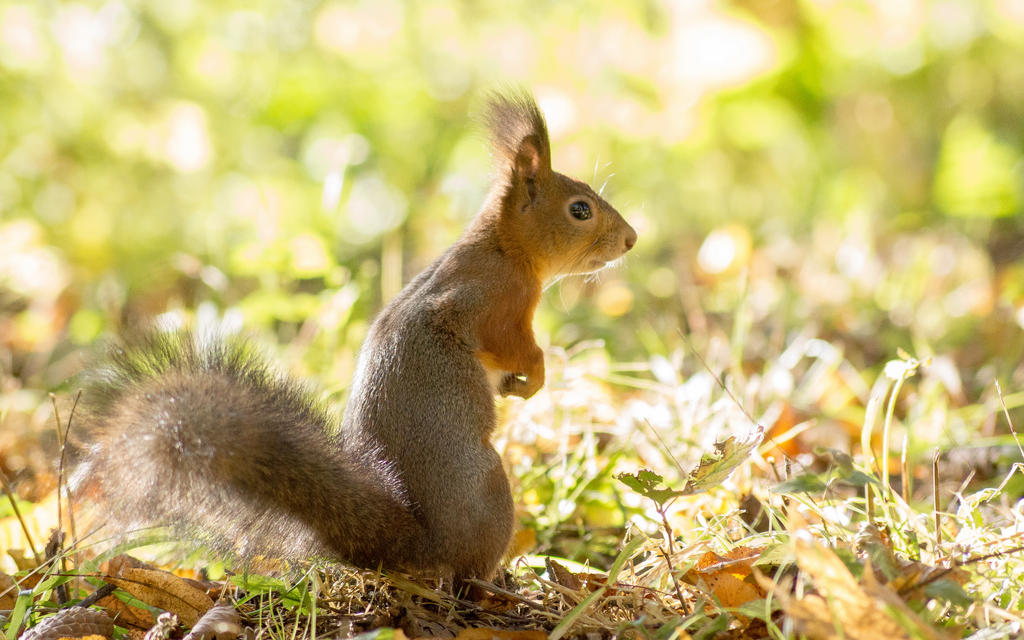 squirrel in the park by Henrikson