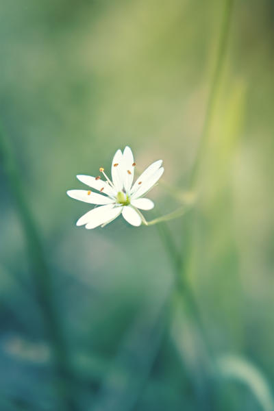 Delicate by JunnyPhotography