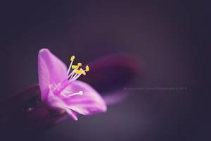 Purple rain copie by JunnyPhotography