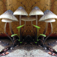 mushrooms - stock by JenniNexus
