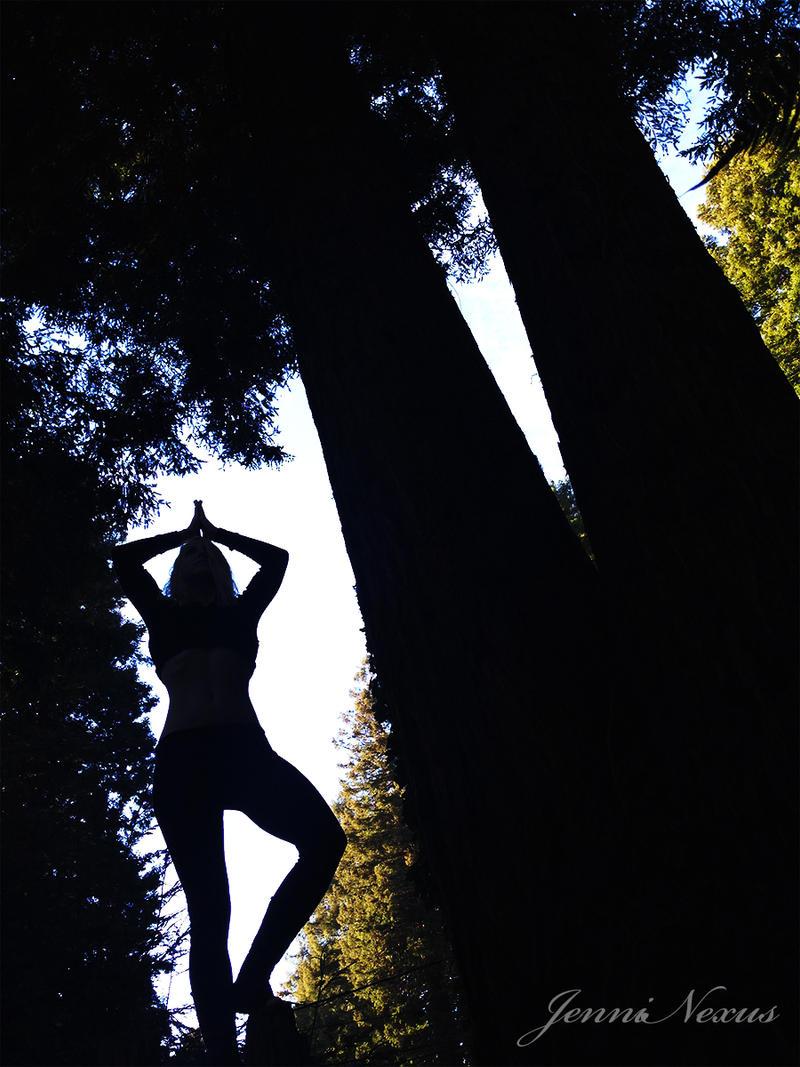 old growth redwoods selfie - stock for art by JenniNexus