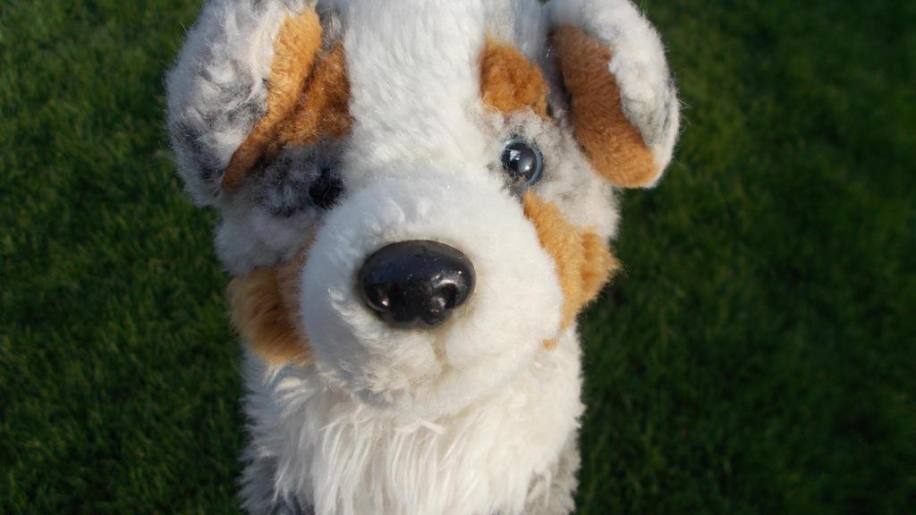 Webkinz SIgnature Australian Shepherd by SpanielLuver54 on ...  Webkinz SIgnatu...