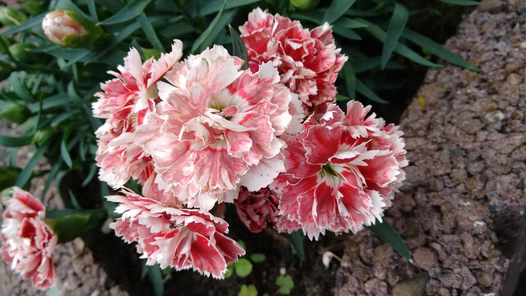 Flower by Skopela