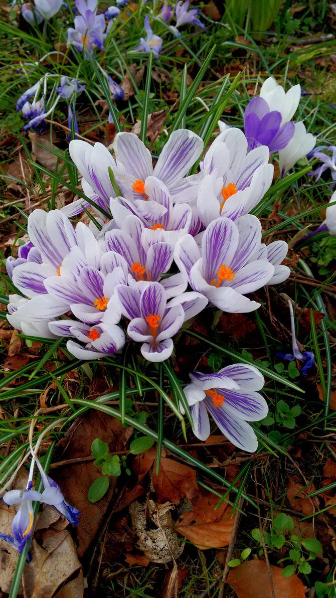 Lila Flowers by Skopela
