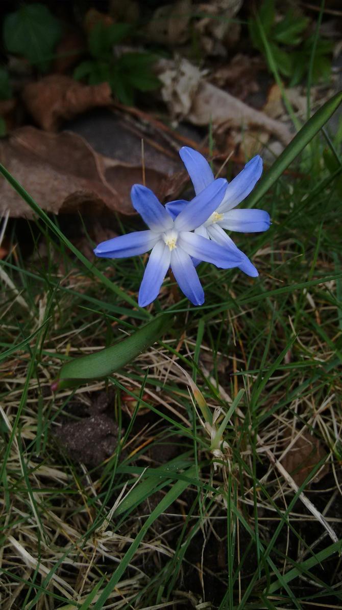 Blue Flower by Skopela
