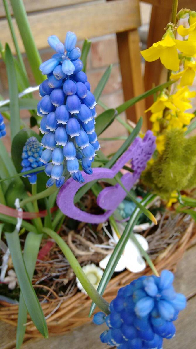Blue Bells by Skopela