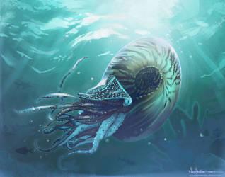 Ammonite by nelsoncosentino