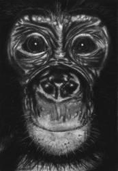 Bonobo by Zerinity