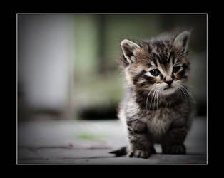 Cat by MuratGezer