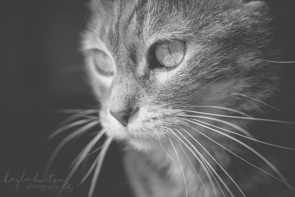 Whiskers by xsouthbound