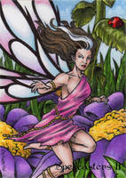 Fairy Sketch Card - Spellcasters II by tonyperna