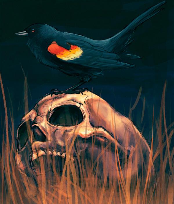 Bird And Skull by ivygreane