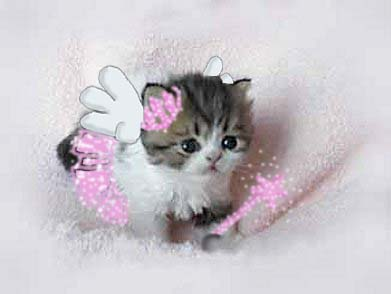 pritty kitty by conaira